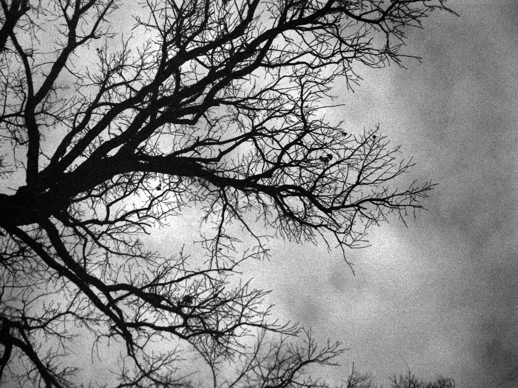 Troy's Photos: Nature & Art - Black and white tree in winter